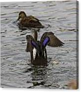 Duck Pict 1 Canvas Print