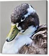 Duck Portrait Canvas Print