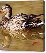 Duck Reflection Canvas Print