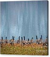 Duck Reflections Canvas Print
