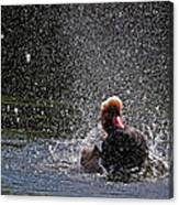 Duck Shower Canvas Print