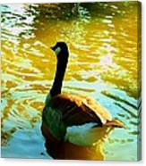 Duck Swimming Away Canvas Print
