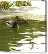 Duck Swimming In A Frozen Lake Canvas Print