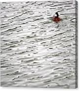 Duck Wake Canvas Print