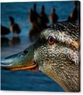 Duck Watching Ducks Canvas Print