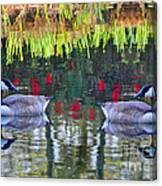 Duckland Pond Reflections Canvas Print