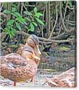 Ducklings Emancipated Canvas Print