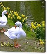 Ducks And Daffodils Greeting Canvas Print