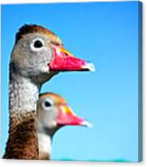 Ducks At Attention Canvas Print