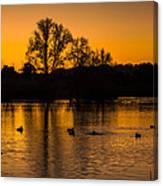 Ducks At Sunrise On Golden Lake Nature Fine Photography Print  Canvas Print