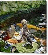 Ducks At The Koi Pond Canvas Print