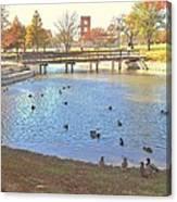 Ducks At The Park Pond Canvas Print