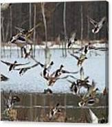 Ducks Away Canvas Print