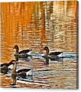Ducks In The Fall Canvas Print