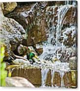 Ducks In The Falls Canvas Print