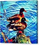 Ducks On A Log Canvas Print