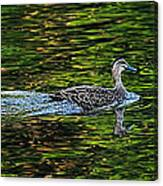 Ducks On Green Reflections - Panorama Canvas Print