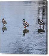 Ducks On Ice Canvas Print