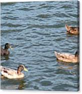 Ducks On Spaulding Pond Canvas Print