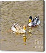 Ducks Pair Looking To Camera Canvas Print