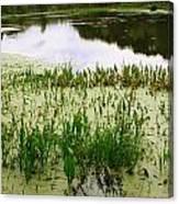 Duckweed Reflection Canvas Print