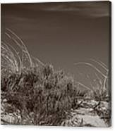 Dune And Blue Sky Canvas Print
