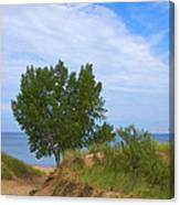 Dune - Indiana Lakeshore Canvas Print