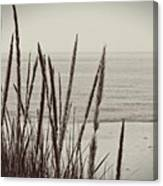 Dune Grass In Early Spring Canvas Print