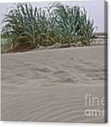 Dune Grass On Beach Dune Landscape Art Prints Canvas Print