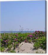 Dune Roses Canvas Print
