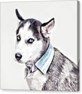Duoduo The Husky Canvas Print