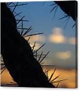 Dusk Settles On A Desert Cholla Cactus Canvas Print