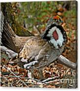 Dusky Grouse Cock Canvas Print
