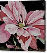 Dustie's Poinsettia Canvas Print