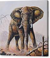 Dusty Jumbo Canvas Print