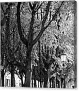 Dutch City Trees - Black And White Canvas Print