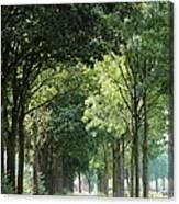 Dutch Landscape - Country Road Canvas Print