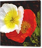 Eager Poppies Canvas Print