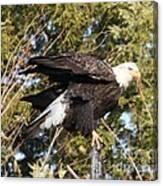 Eagle 1982 Canvas Print