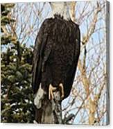 Eagle 1991a Canvas Print