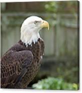 Eagle 2 Canvas Print