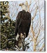 Eagle 5 Canvas Print