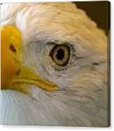 Eagle 6 Canvas Print
