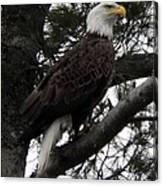 Eagle 9786 Canvas Print