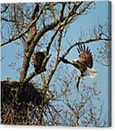Eagle And The Fish 2 Canvas Print