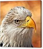 Eagle At Sunset Canvas Print