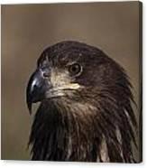 Eagle Beauty Canvas Print