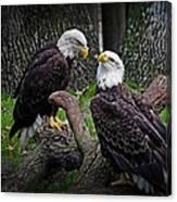 Eagle Couple Canvas Print