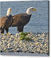 Eagle Couple Canvas Print