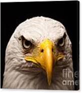Eagle Eyed Canvas Print